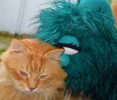 Le chat Bidule et Madame Câlins